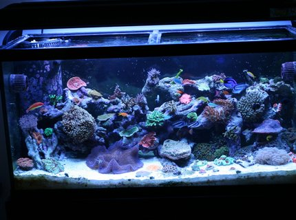 90 gallons reef tank (mostly live coral and fish) - 7 months old