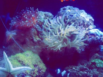 14 gallons reef tank (mostly live coral and fish) - bio cube reef tank