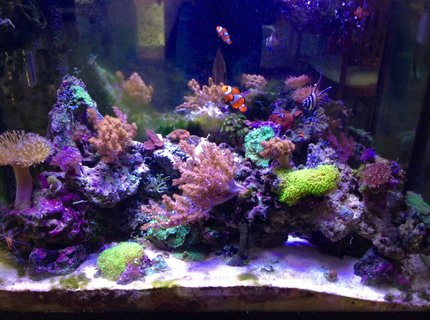 37 gallons reef tank (mostly live coral and fish) - Mixed 37 gal