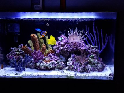 20 gallons reef tank (mostly live coral and fish) - New tank setup