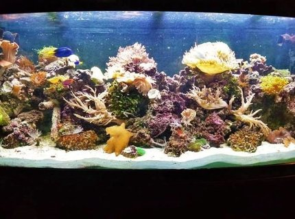 120 gallons reef tank (mostly live coral and fish) - Drop of a ocean seen indoors