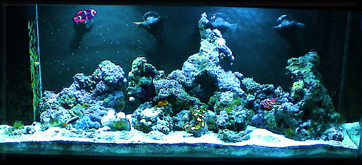 Saltwater And Reef Tank Cycling Ratemyfishtank Com