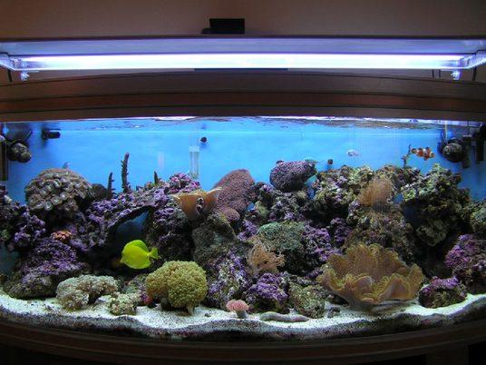 Dancryer's Corals & Inverts Photo (ID 3041) - Full Version