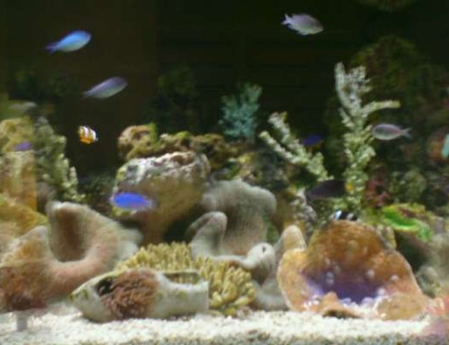 900 gallons reef tank (mostly live coral and fish) - reef tanks