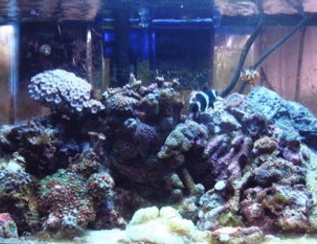 999 gallons reef tank (mostly live coral and fish) - 10 gallon nano reef