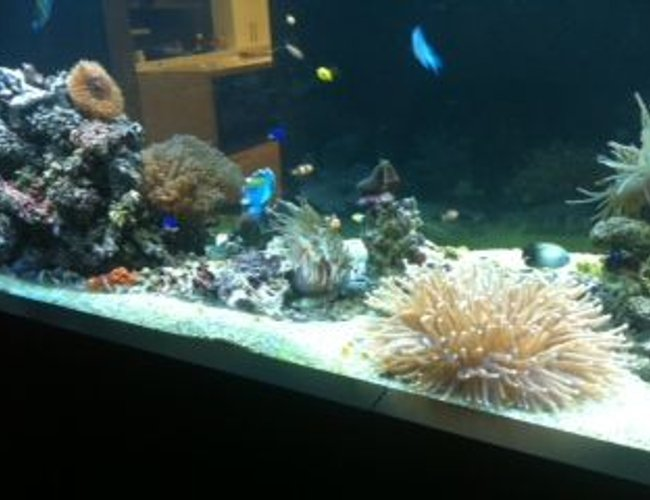 800 gallons reef tank (mostly live coral and fish) - About 1/3 stocked currently 160kg live rock with various corals, anemones, shrimp, prawns, crabs, starfish and fish
