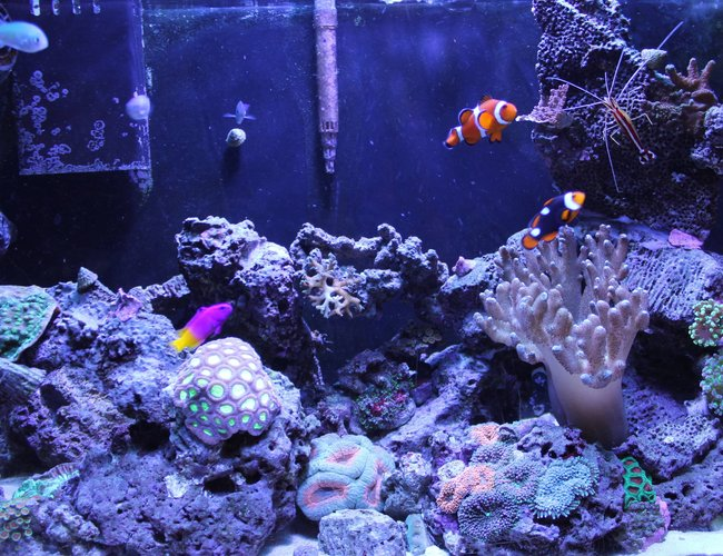 33 gallons reef tank (mostly live coral and fish) - 2 years old.