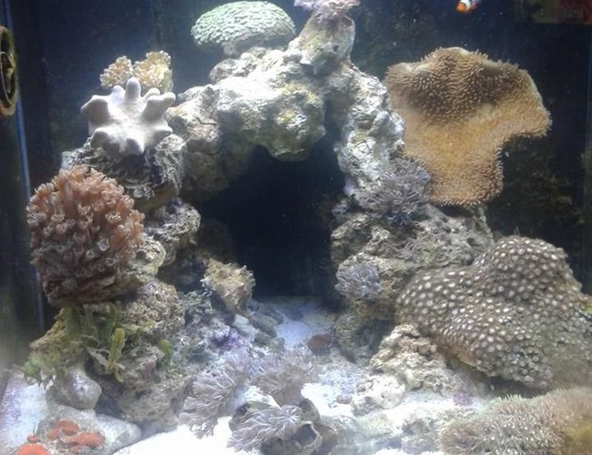 20 gallons reef tank (mostly live coral and fish) - Day Lights on 