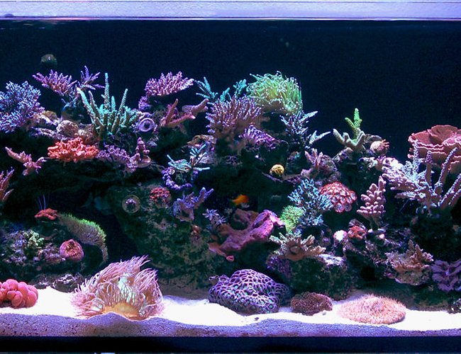 105 gallons reef tank (mostly live coral and fish) - Updated Pic