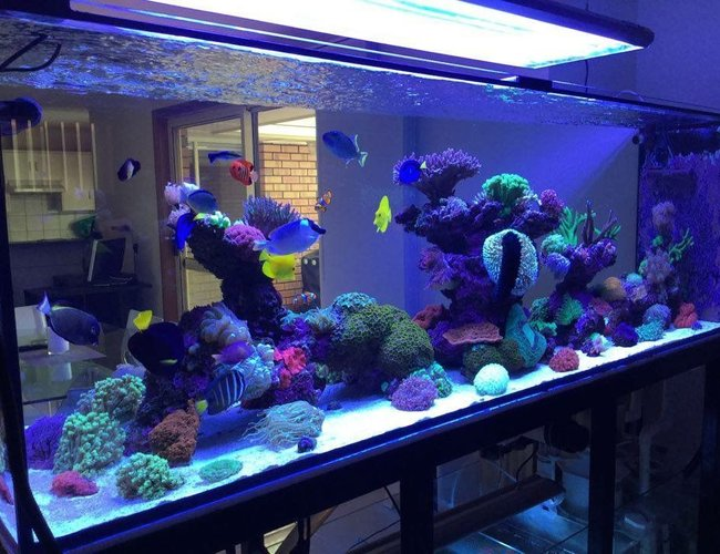 view all top ten reef tanks - 400 gallons reef tank (mostly live coral and fish) - 400g mixed reef