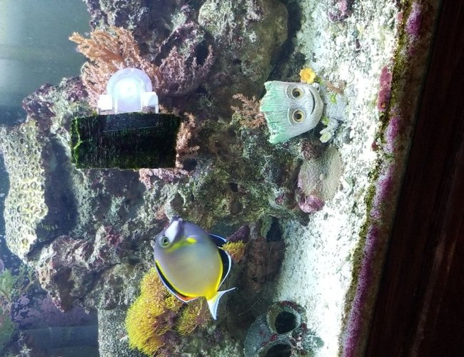 75 gallons reef tank (mostly live coral and fish) - Our tank