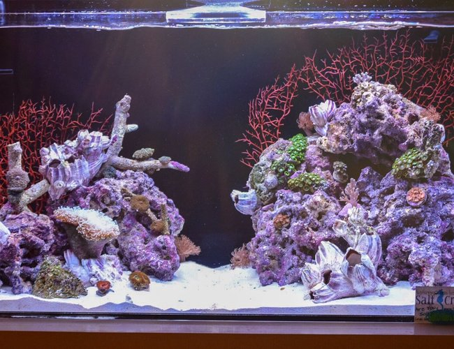 30 gallons reef tank (mostly live coral and fish) - 30 gal mixed reef