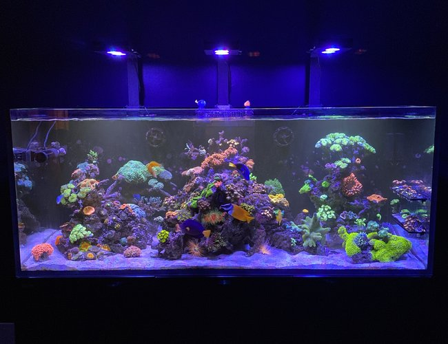 165 gallons reef tank (mostly live coral and fish) - Wonders of the Ocean