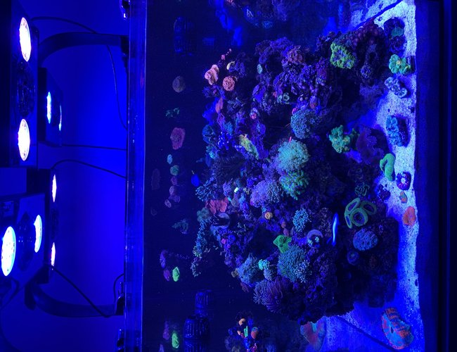 200 gallons reef tank (mostly live coral and fish) - my 95g display tank