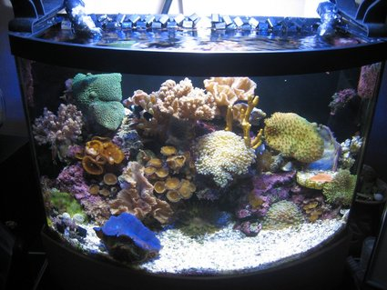Rated #84: 7 Gallons Reef Tank - 7 gallon tank shot