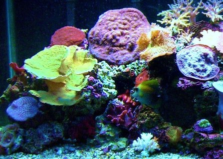 Rated #37: 75 Gallons Reef Tank - 75 gallon reef tank