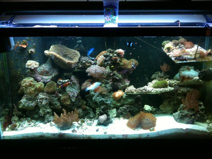 Rated #66: 90 Gallons Reef Tank - update 6 months later..