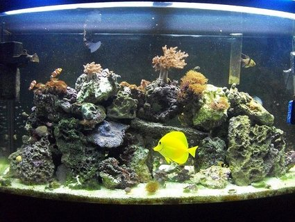 Rated #85: 46 Gallons Reef Tank - 46 gallon bowfront reef tank