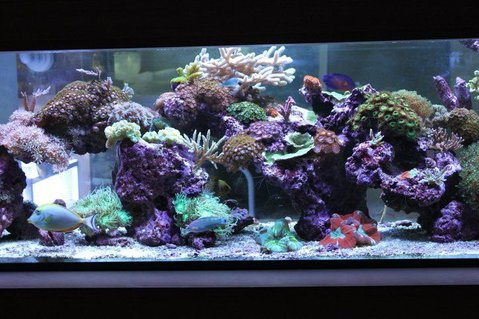 Rated #6: 120 Gallons Reef Tank - My living room Aquascape