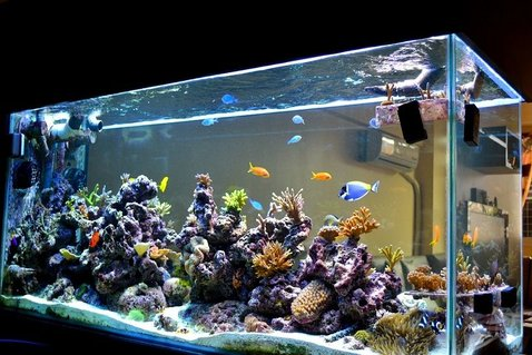 Rated #8: 200 Gallons Reef Tank - 3D Akil's Reef Tank (you can see it on YouTube)