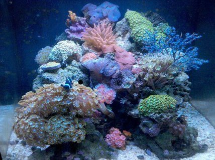 Rated #7: 28 Gallons Reef Tank - Nano reef