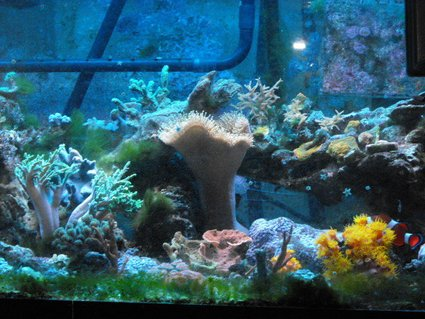Rated #64: 45 Gallons Reef Tank - Bit of everything.