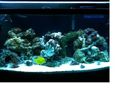 Rated #68: 75 Gallons Reef Tank - 75 gallon saltwater reef tank