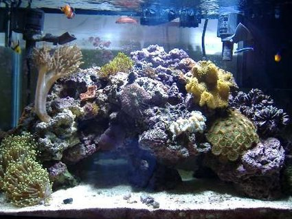 Rated #60: 29 Gallons Reef Tank - a reef tank