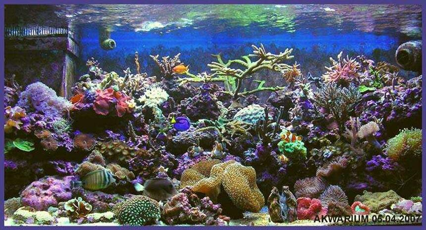 Rated #3: 540 Gallons Reef Tank - my new tank vol 2