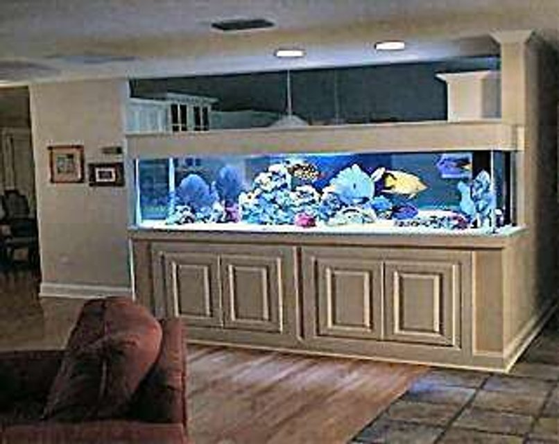 Rated #42: 80 Gallons Reef Tank - my pool