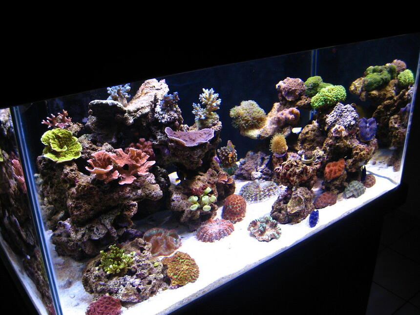 Rated #6: 90 Gallons Reef Tank - my reef tank