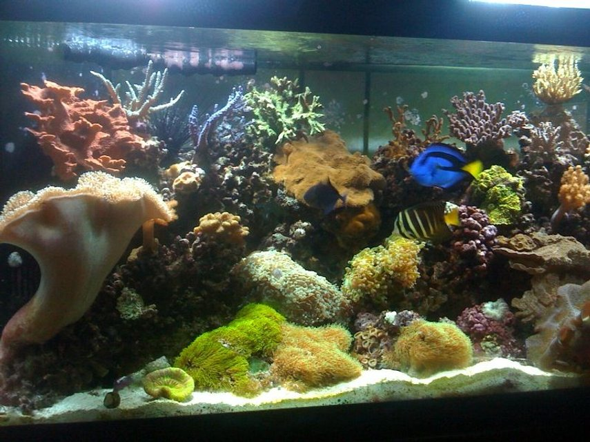 Rated #13: 75 Gallons Reef Tank - 75 gal mixed reef