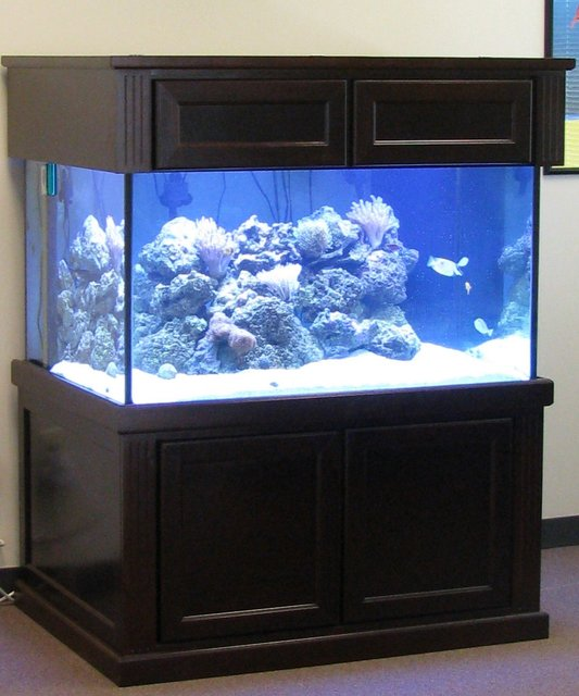 Rated #103: 500 Gallons Reef Tank - My Setup, 200 gallon with 50 gallon sump