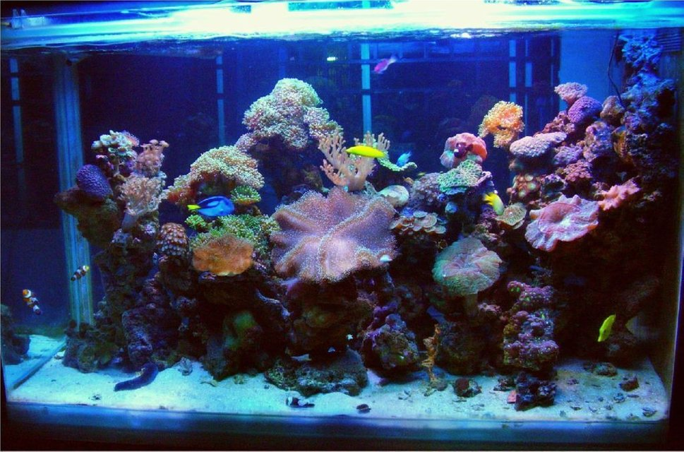 Rated #33: 250 Gallons Reef Tank - Latest Uploade Picture