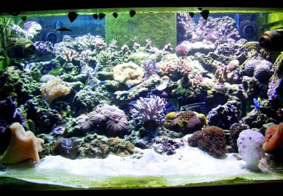Rated #62: 300 Gallons Reef Tank