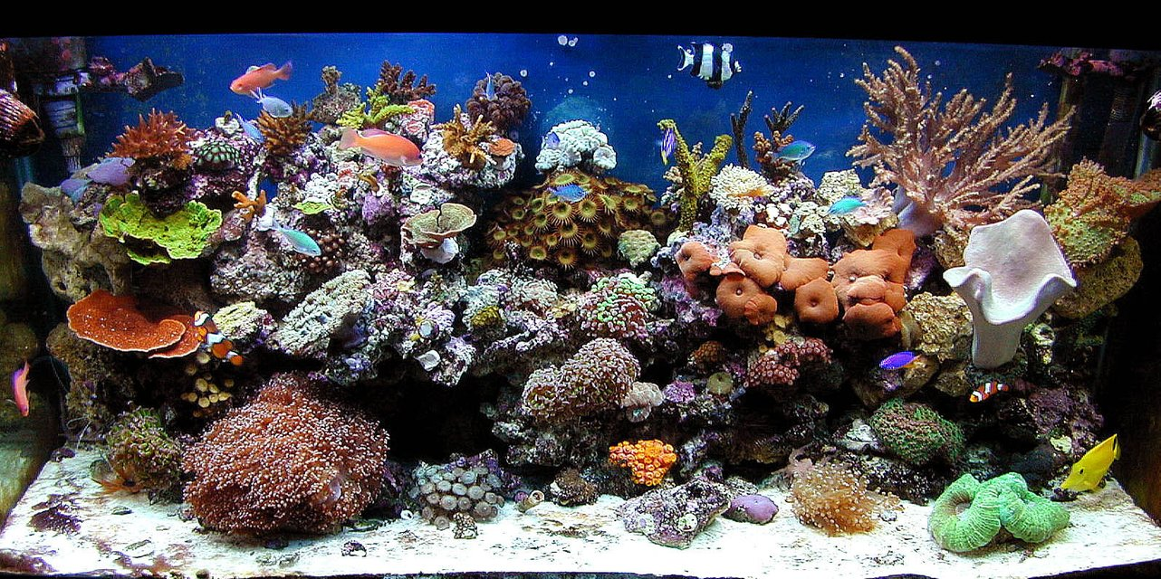 Rated #1: 90 Gallons Reef Tank - my 90 oct 09