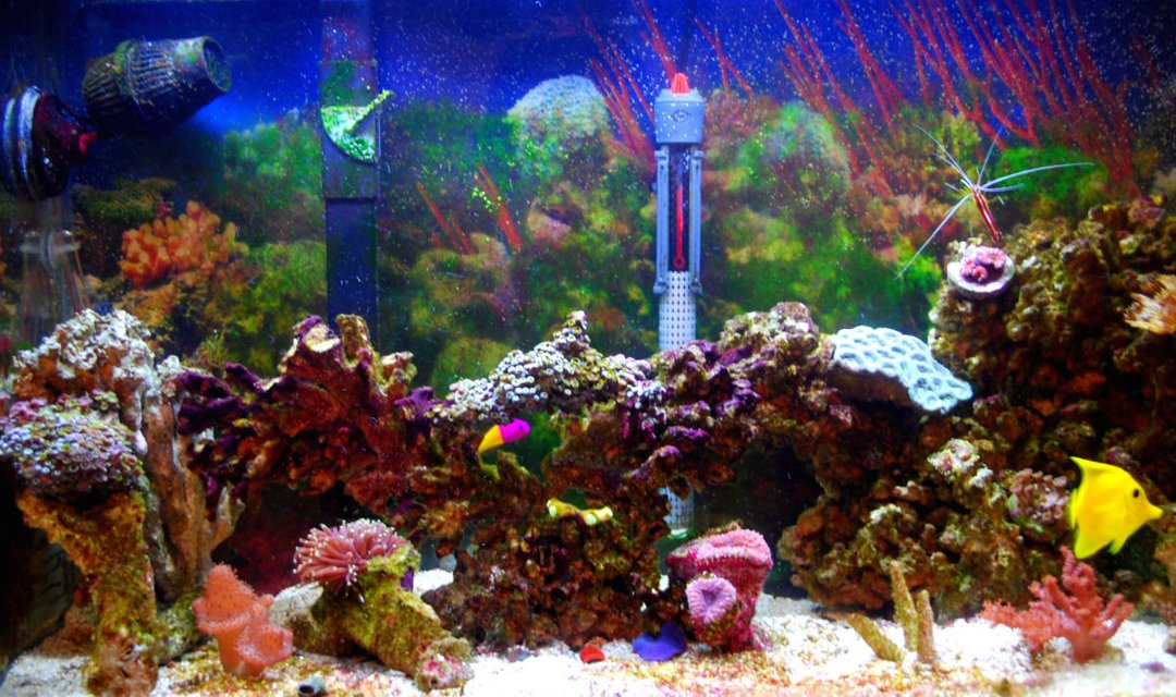 Rated #118: 29 Gallons Reef Tank - New image shortly, Very old pic.