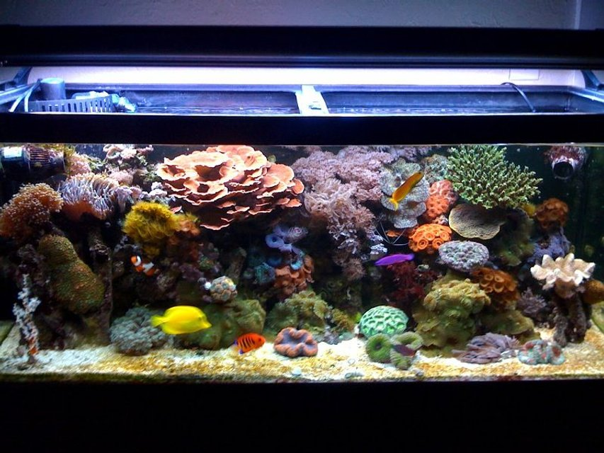 Rated #3: 75 Gallons Reef Tank - My Reef Tank!!!!!!!!