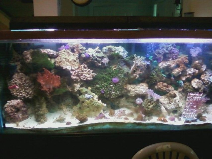 Rated #105: 75 Gallons Reef Tank - 150g reef
