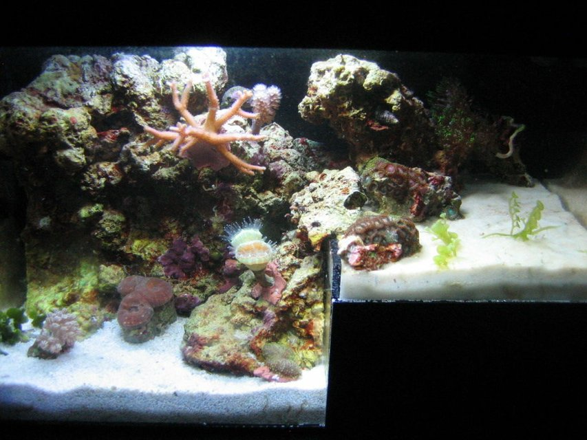 Rated #108: 1 Gallon Reef Tank - The Reef's Edge