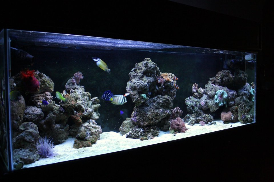 Rated #33: 90 Gallons Reef Tank - 90 Gallon