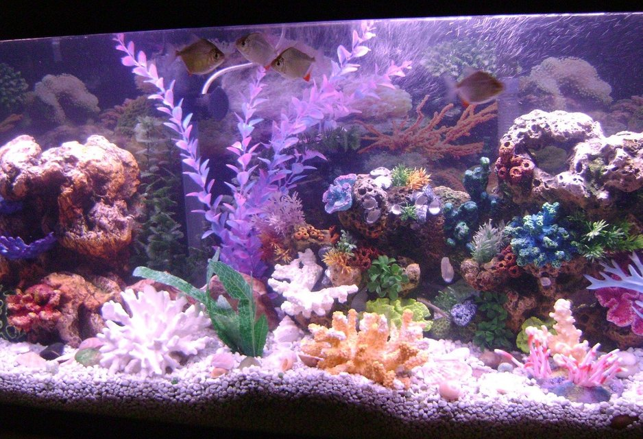 Rated #101: 55 Gallons Reef Tank - new pics of my tank.i noticed