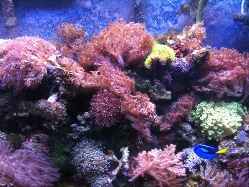 Rated #51: 60 Gallons Reef Tank - Reef Tank One Year Old