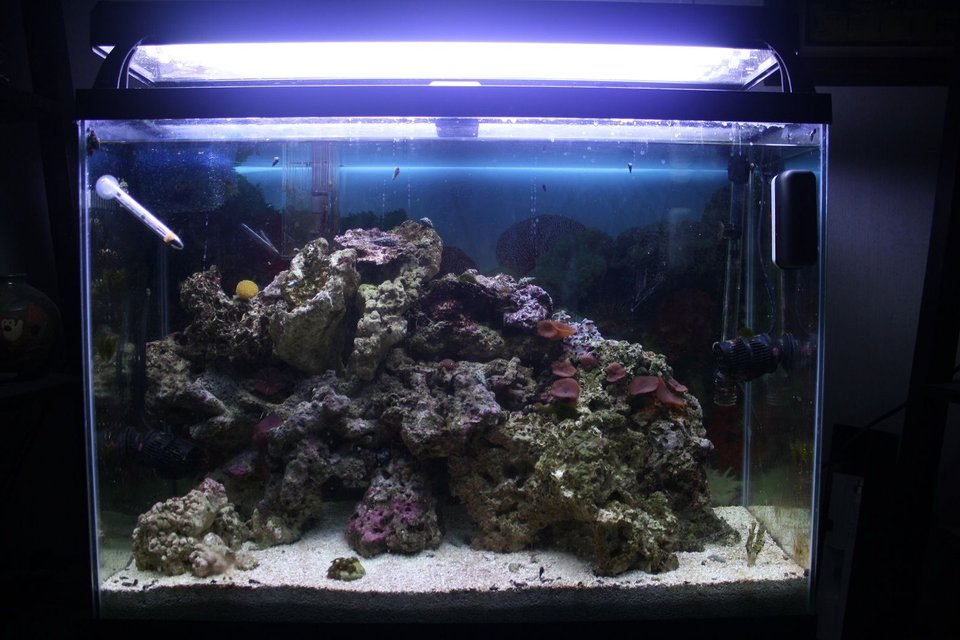 Rated #93: 37 Gallons Reef Tank - My first ever saltwater tank. Set up in the end of August 2011