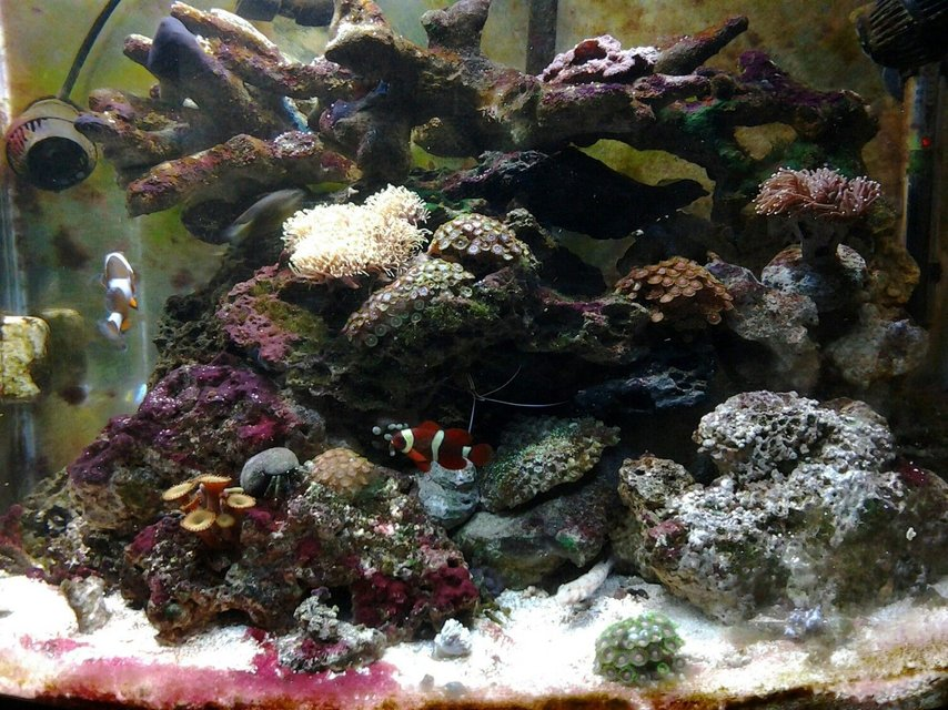 Rated #43: 30 Gallons Reef Tank - Full View