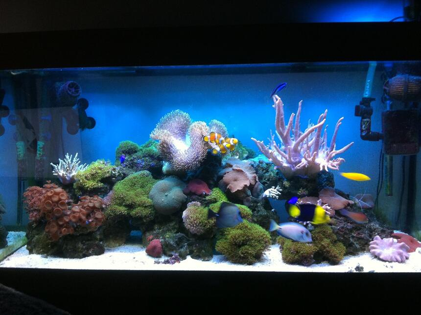 Rated #2: 67 Gallons Reef Tank - Updated photo 12/3/2013