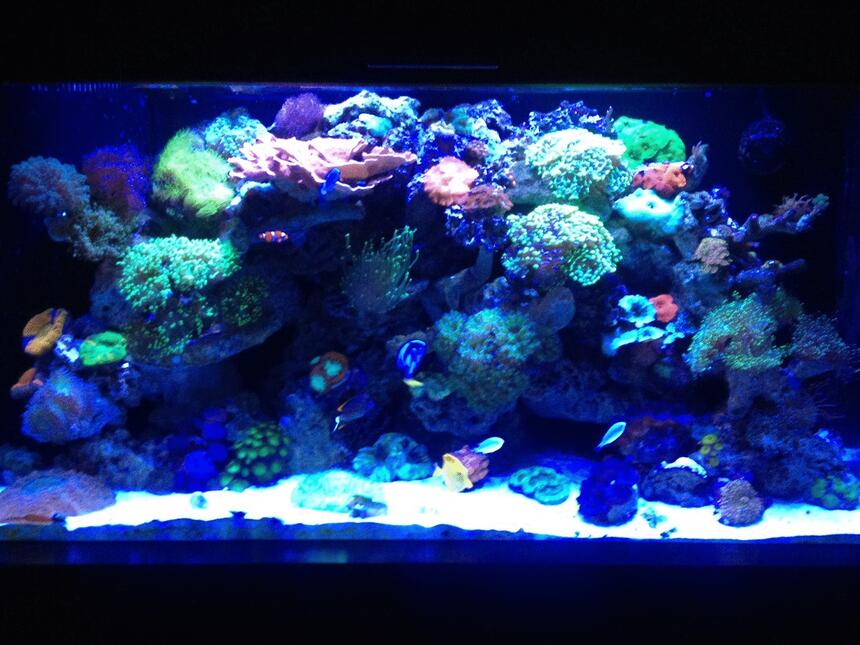 Rated #9: 90 Gallons Reef Tank - Old shot let me know what you think, ill try and get a new one today, Mind you this was taken with an Iphone so quality is no the best