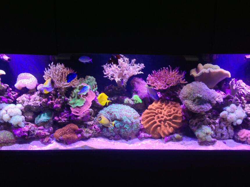 Rated #1: 120 Gallons Reef Tank - Living the reef hobby and loving it