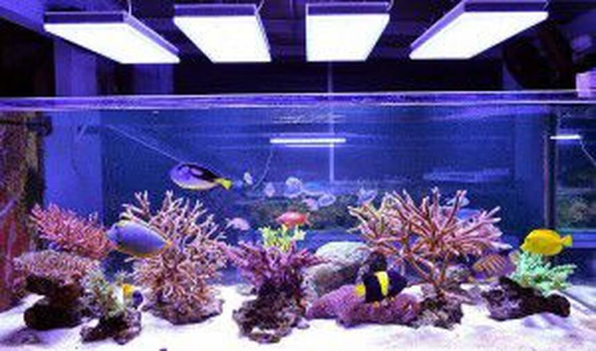 Rated #8: 2 Gallons Reef Tank - this is my fish tank with lighting