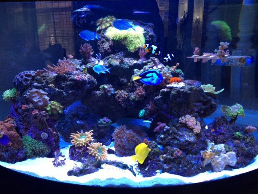 Rated #5: 92 Gallons Reef Tank - 92 gallon Oceanic 1/4 circle. Up and running 14 months.